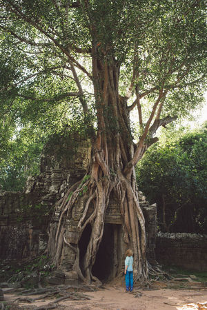 Siem Reap Cambodia Angkor Curly Hair Girl Tree Plant Tree Trunk Real People Trunk Nature One Person Growth Rear View Land Day Lifestyles Leisure Activity Forest Women Men Standing Full Length Branch Outdoors
