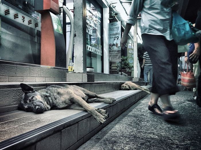 Streetphotography Dog EyeEm Thailand