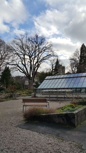 Quiet Places Botanical Garden Botanical Gardens Basel, Switzerland Tree Cloud - Sky Day No People Outdoors Sky Nature