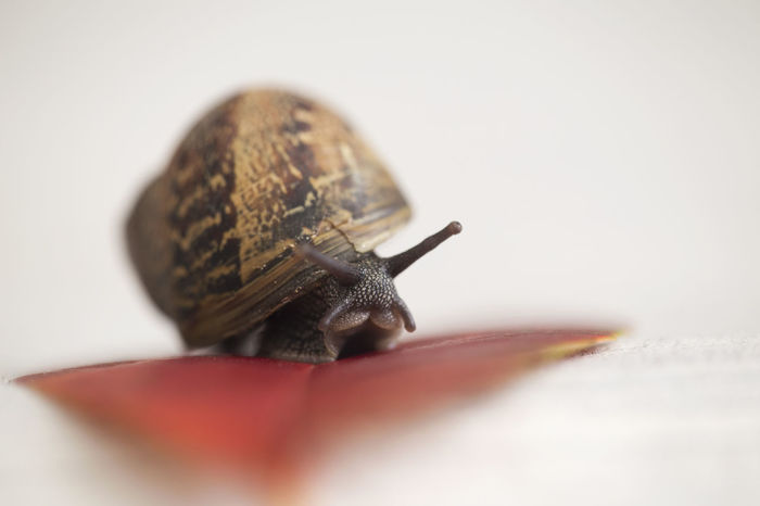 Nature Nature_collection Snail On Leaf Snail Mollusk Animal Antenna