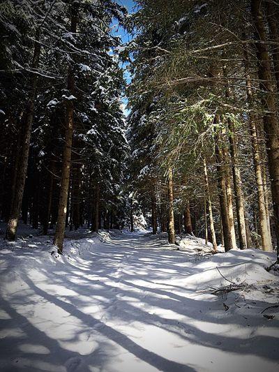 Bosco, relax, silenzio, bosco, neve