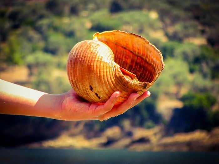 Shell Huge Huge Shell Shells Hand Wet Hand Wet Human Hand Human Body Part Holding Nature Beauty In Nature Marine Animals Animal Themes Beach Beach Photography Art Is Everywhere TCPM Cut And Paste Greek Islands Summer Summer Holidays The Great Outdoors - 2017 EyeEm Awards Live For The Story Sommergefühle