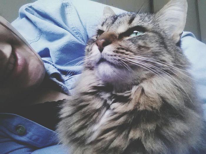 Cat Love ♥