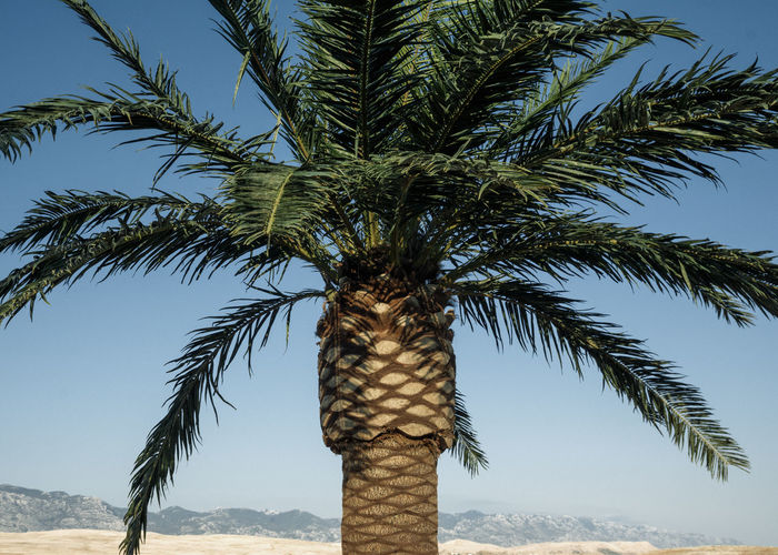 Vacation Postcard Desert Linas Was Here Nature Palm Tree Panorama Postcard Blue Sky Chill Landscape Mountains Relax Summer Vacation