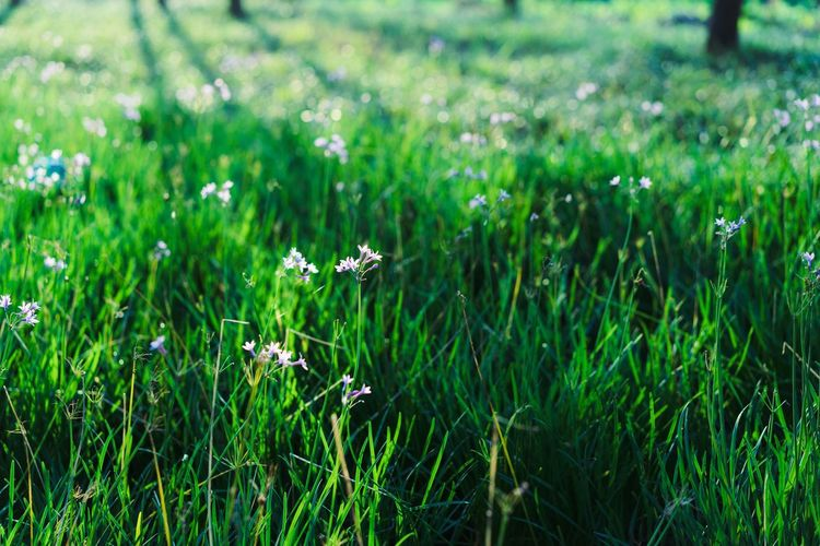 Grass Field Growth Green Color Nature Plant Day Flower One Animal No People Beauty In Nature Animals In The Wild Outdoors