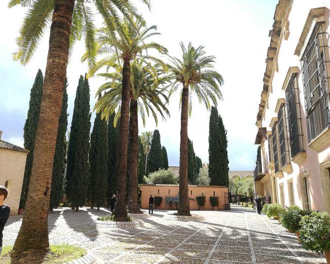 Jerez De La Frontera, Spain Jerez De La Frontera EyeEmNewHere Tree Palm Tree Tree Trunk Sky Architecture