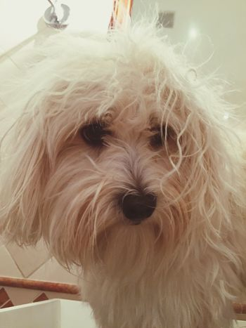 Good Morning Isis😍 Myprincess🐶🐶 Ilovemydog 😜😍😍