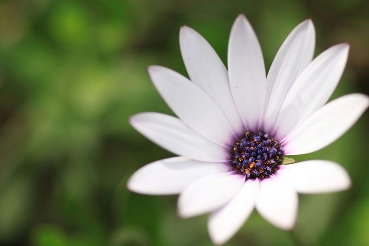 Sigma 70mm Macro Macro Photography Macrophotography Macro_flower Macro Nature EyeEm Macro Macroworld_tr