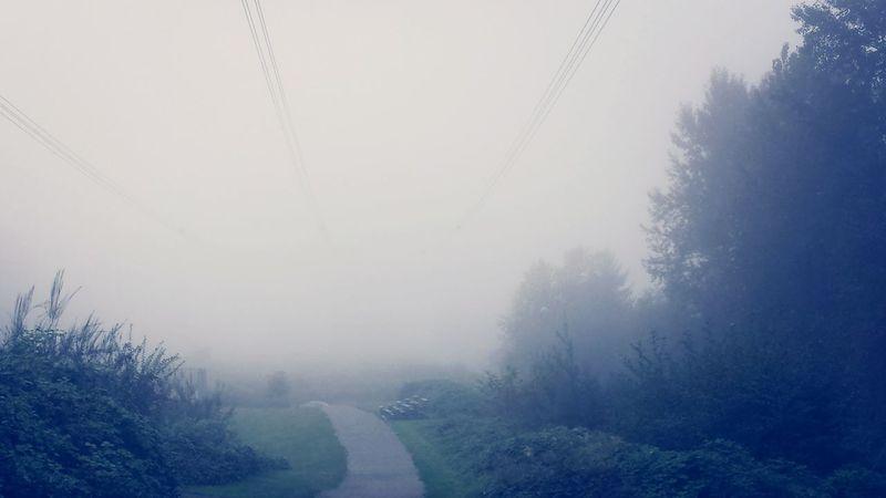 Foggy start to the day Foggy Morning Fog City