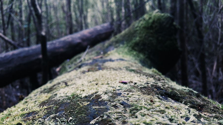 Surface level of fallen tree in forest