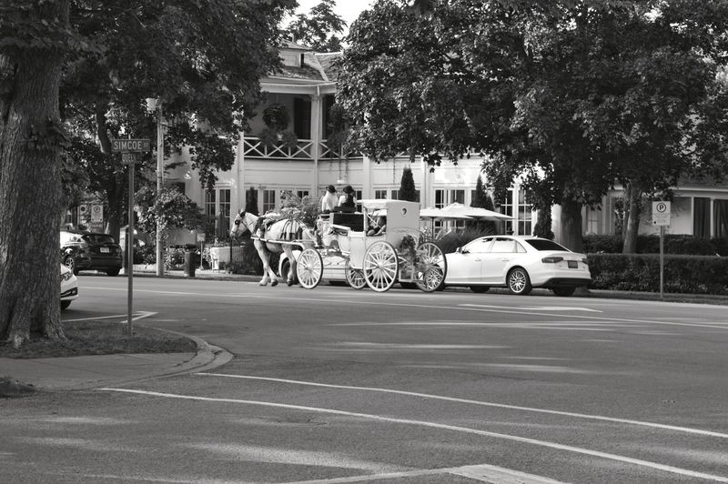 Old and new. Vintage Travel Destinations Nikon Photography Nikon D3200 Black And White Black And White Photography Objects Of Interest Tree City Land Vehicle Car Road Street Architecture Building Exterior Built Structure City Street Crosswalk