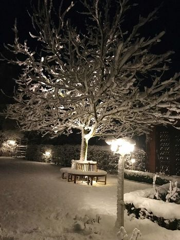 Tree Illuminated Night Branch Winter Outdoors Bare Tree Cold Temperature Nature Beauty In Nature Enjoying Life Magic World Quiet Moments Snow Snow Covered