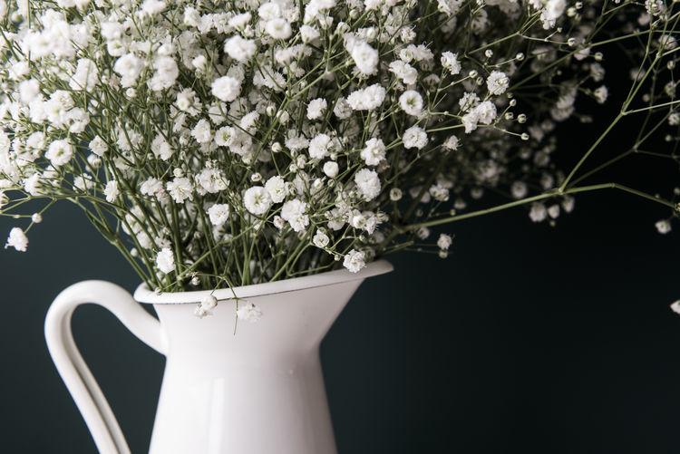 Vase Flower Flowers Vase Of Flowers White White Background White Color White Flower