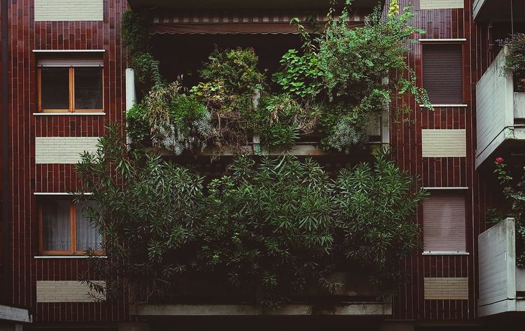 Building Exterior Architecture Built Structure Window No People Plant Green Color Outdoors Day Tree Nature Adapted To The City Windows Urban Garden Architecture Urban Perspectives Streetphotography Urban Nature Trees Plants Beauty In Nature Growth Nature City City Life The City Light