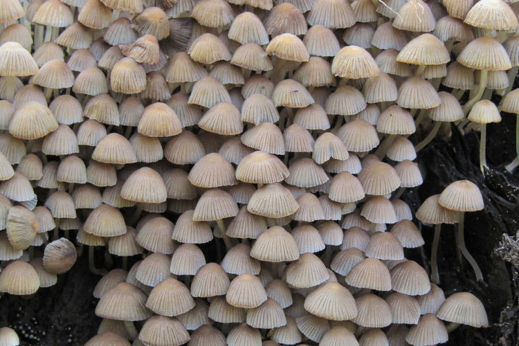 Mushrooms Abundance Backgrounds Close-up Day Deforestation Forest Full Frame Fungus Large Group Of Objects Log Lumber Industry Mushroom Nature No People Outdoors Stack Timber Toadstool Tree Wood Wood - Material
