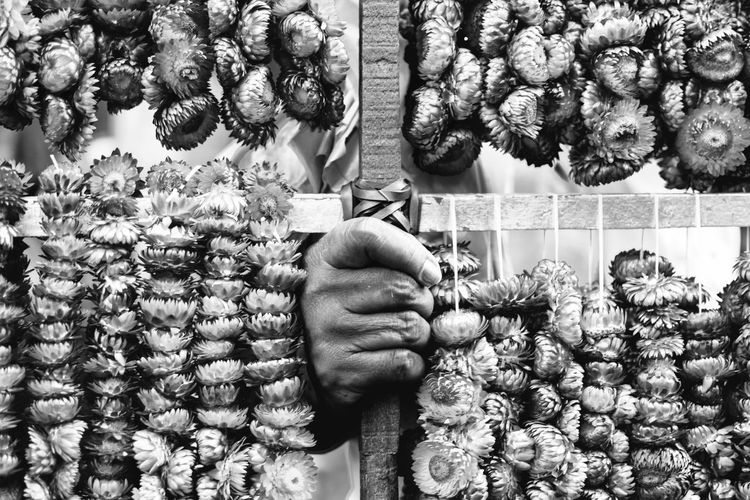 Everlasting flowers vendor. Bnw_greatshots Bnw Bnwphotography Bnwphilippines Streetphotography Streetsofmanila Manila Igersmanila Igersbnw Igers Philippines Wheninmanila Bnwportrait Bnwmood Nikon Street 35mm Nikond3300 Bnw_of_our_world #Child Luneta #streetchildren Blooming Flower Head Stamen Single Flower Rosé Osteospermum Hibiscus Sunflower Passion Flower Dahlia Fragility Petal Pollen In Bloom Single Rose Cosmos Flower Growing Pink Plant Life Groom Pine Cone Inner Power This Is Aging Visual Creativity Summer Exploratorium Focus On The Story The Street Photographer - 2018 EyeEm Awards The Traveler - 2018 EyeEm Awards The Photojournalist - 2018 EyeEm Awards A New Perspective On Life