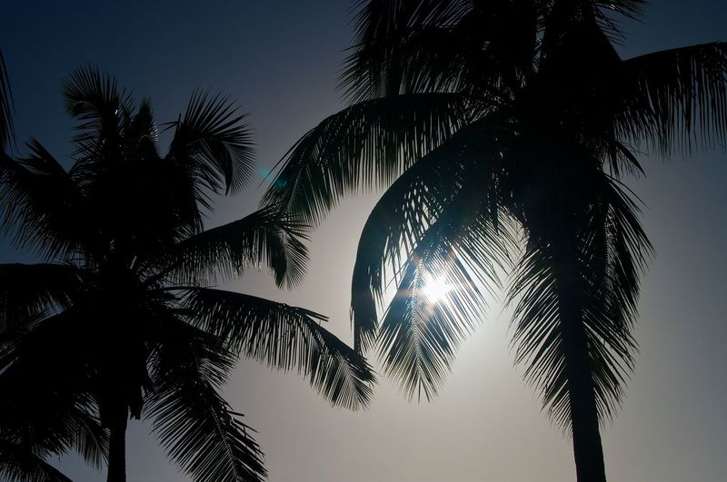 Palm Trees Light Beach Beauty In Nature Clear Sky Day Landscape Low Angle View Nature No People Outdoors Palm Tree Scenics Silhouette Sky Summer Sun Tree