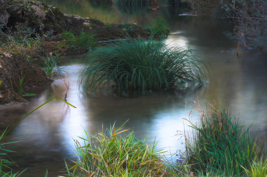Water Plant Nature Lake Beauty In Nature Tranquility Growth Grass No People Scenics - Nature Tree Outdoors River