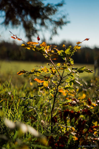 autumn Autumn Autumn colors Golden Summertime View Weather Beauty In Nature Day Golden Days Grass Growth Nature No People Outdoors Sky Summer Sun