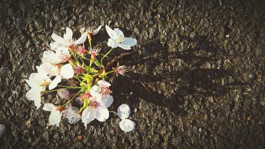 Before Ten Blossom Fallen Flowers Things On The Ground Morning Light Shadows