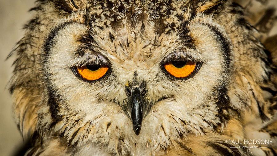 Owl Owl Owls💕