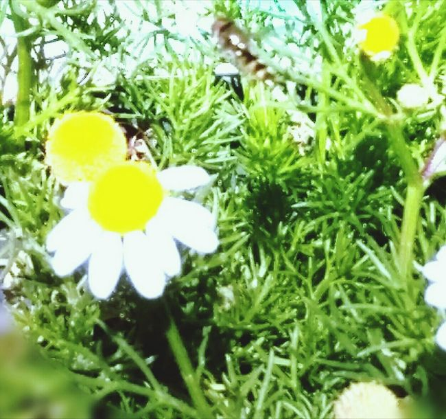 Yellow Growth Nature Green Color Flower Beauty In Nature Plant Outdoors Fragility No People Day Close-up Freshness Flower Head