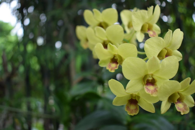 Green Green Color Nature Nature On Your Doorstep Nature Photography Orchid Orchid Blossoms Orchids Plant Plants Close-up Nature Nature_collection Naturelovers Orchid Flower Outdoors Plants And Flowers