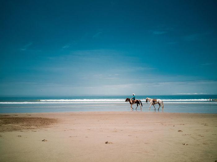 Sea Full Length Water Beach Pets Sand Wave Blue Summer FootPrint Working Animal Horsedrawn Track - Imprint Tire Track Saddle Surf Animal Track Seascape