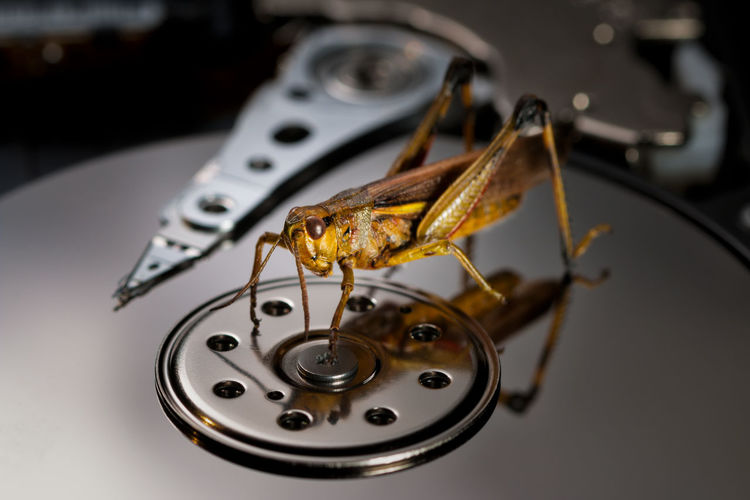 bug in the machine grasshopper Bug Animal Animal Wildlife Animals In The Wild Brown Close-up Communication Computer Bug Equipment Focus On Foreground Grasshopper Hard Drive High Angle View Indoors  Insect Invertebrate Machinery Metal No People One Animal Selective Focus Single Object Still Life Table Technology The Creative - 2018 EyeEm Awards