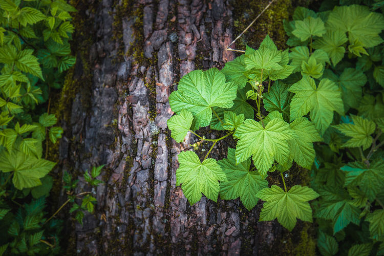 Plant Leaf Plant Part Green Color Growth Nature Tree Land High Angle View Forest Outdoors Close-up Beauty In Nature Trunk Tree Trunk Day No People
