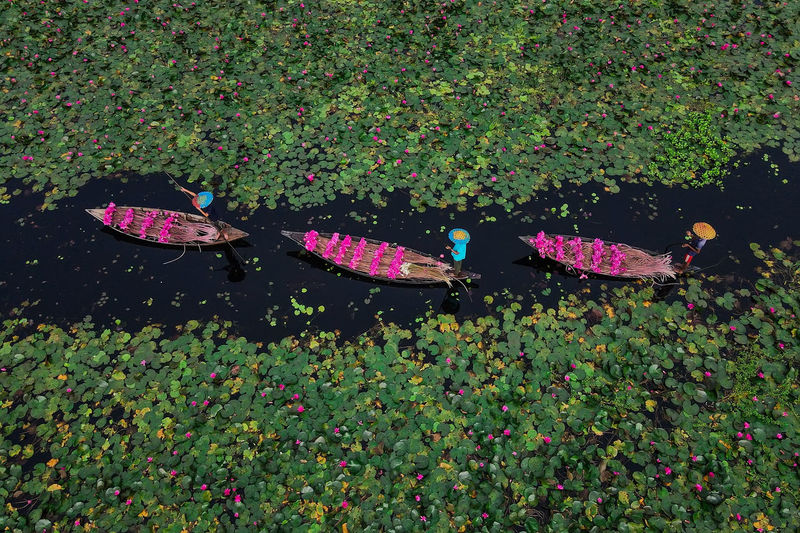 High angle view of multi colored leaves floating on lake