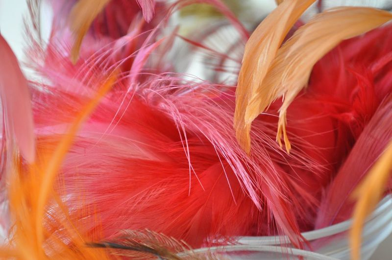 Milliner Beauty In Nature Close-up Day Feather  Focus On Foreground Fragility Freshness Hat Making Lightweight Millinery Multi Colored Nature No People Orange Color Red Selective Focus Softness Still Life Vulnerability  White Color