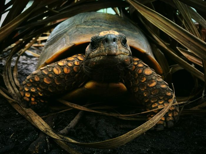 Close-up portrait of tortoise