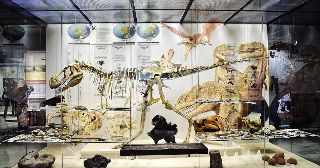 Evolution museum or animal death house? 💀 at least these ones are not real Variation In A Row Indoors  Sculpture Full Length Day Dinasour Skeleton Skeletons Museum Exhibition Bones