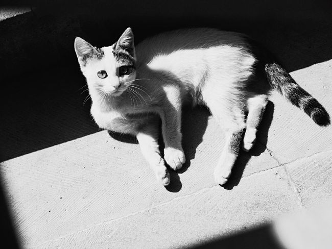 Looking At Camera Cat Blackandwhite Outdoors Pets No People Portrait Geometric Shape Lines EyeEmNewHere Shushannaagapi Shushannaagapiphoto Welcome To Black
