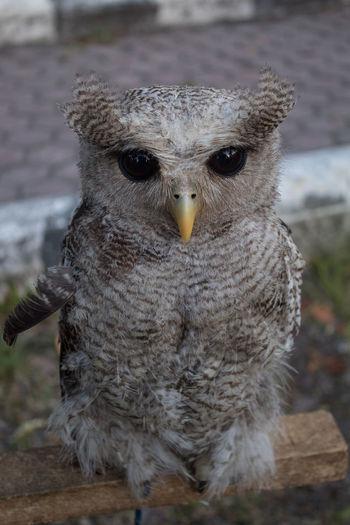owl Bird One