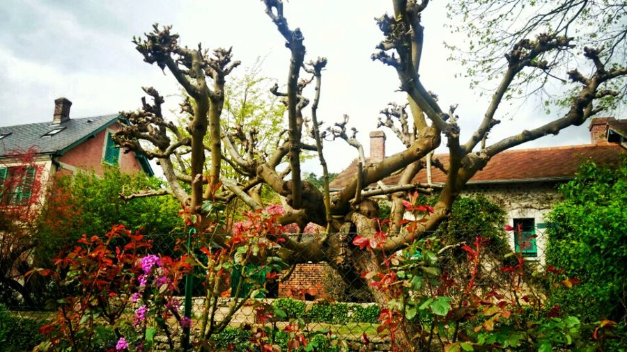 Home & Garden of Claud Monet, Givigny, France. Architecture House Flower Beauty In Nature Claude Monet's Garden France Monet Garden Monet House No People Tree EyeEm Nature Lover