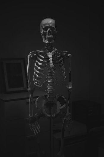 Anatomy Art And Craft Black Background Body Part Bone  Creativity Dark Fear Human Body Part Human Bone Human Representation Human Skeleton Human Skull Indoors  People Representation Science Skeleton Spooky