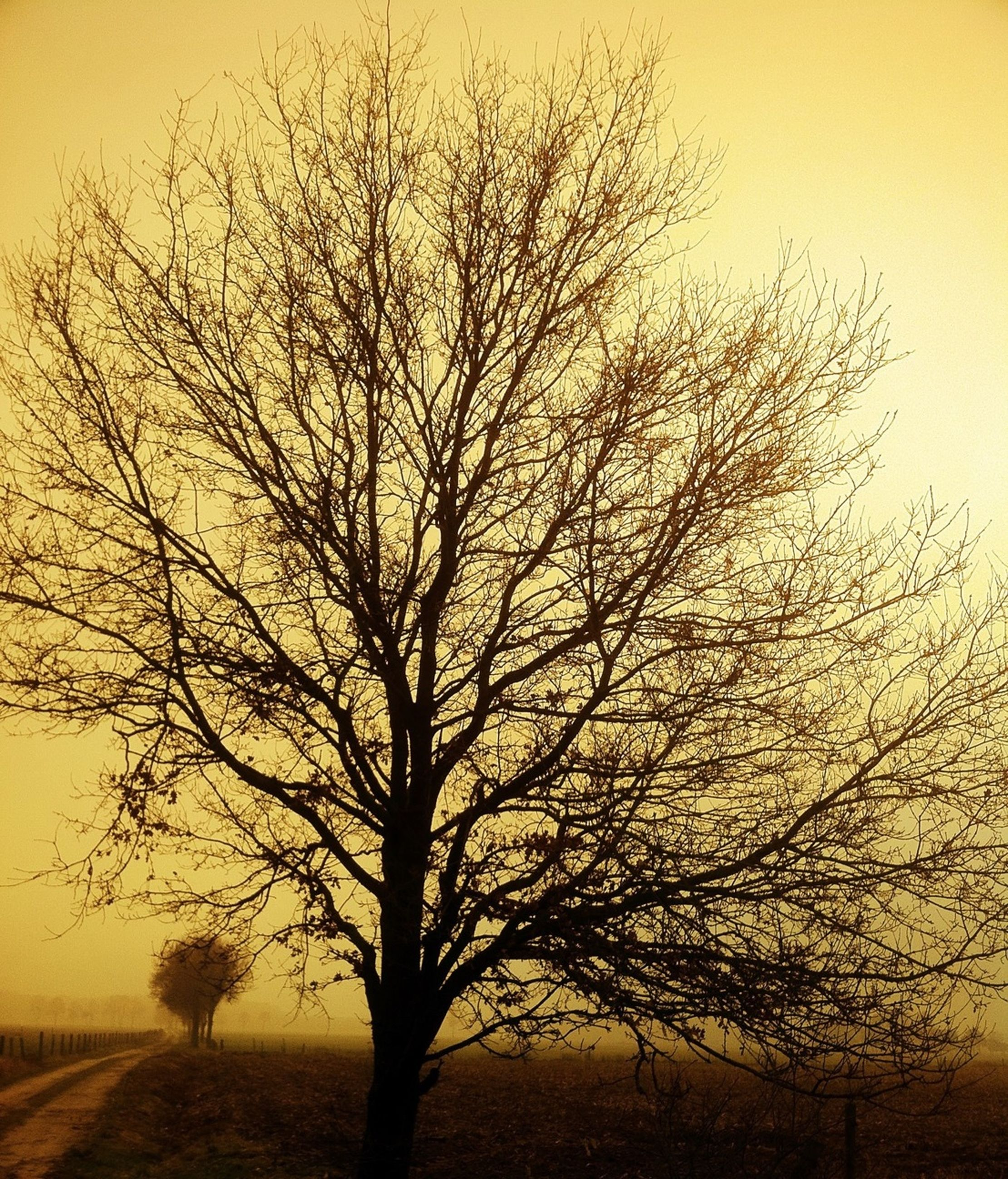 bare tree, sunset, tree, branch, silhouette, tranquility, tranquil scene, landscape, scenics, nature, beauty in nature, field, clear sky, tree trunk, sky, orange color, outdoors, non-urban scene, no people, idyllic