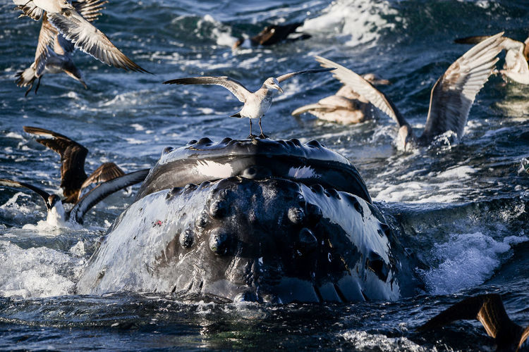 Animal Themes Animal Wildlife Animals In The Wild Aquatic Mammal Bird Day Humpback Whale Large Group Of Animals Mammal Nature No People Outdoors Sea Sea Life Swimming Water Whale