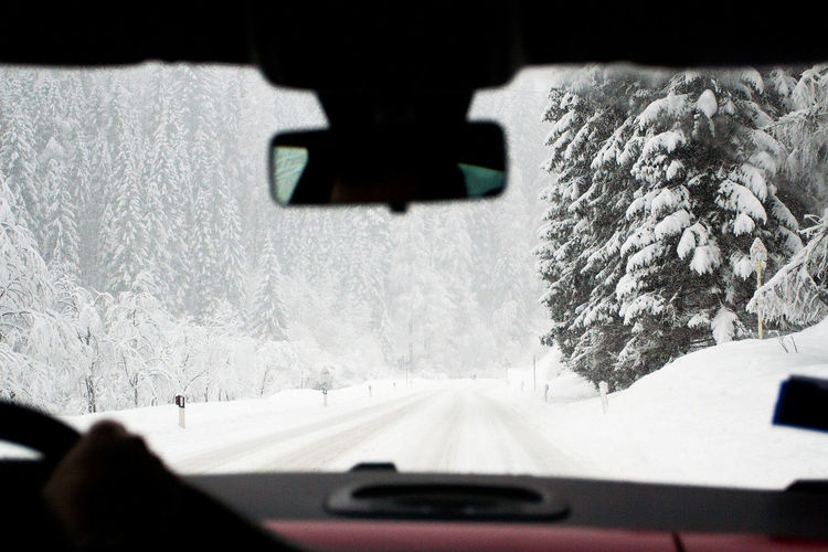 Tree seen through car windshield