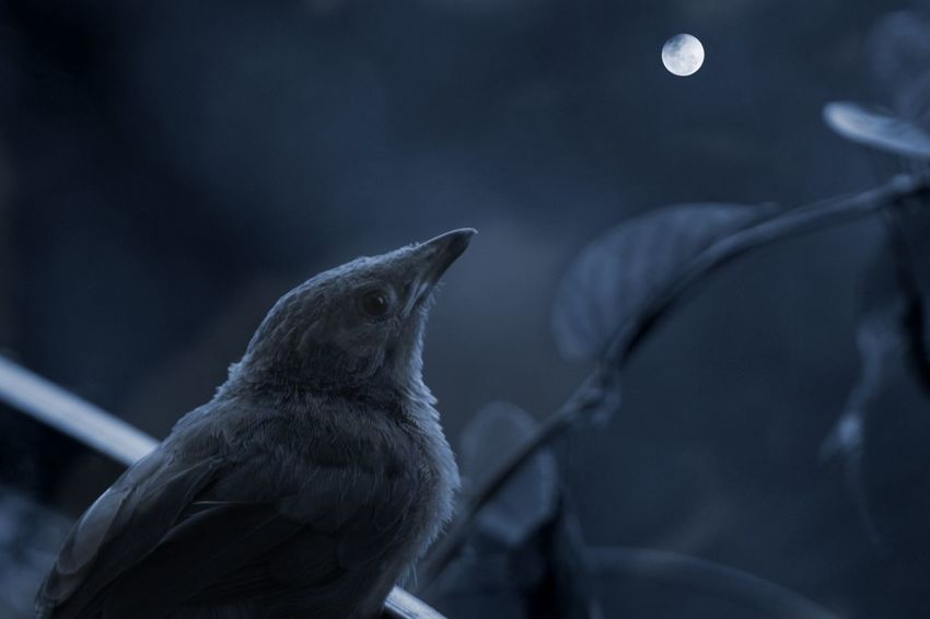 Dreams Silence Of Nature My Dream World Bird Moon Twilight Night Expressions Lonesome Beauty In Nature Close-up Nature Kerala Outdoors No People Focus On Foreground Animal Themes