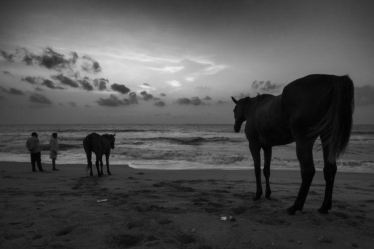 Horses on beach against sky