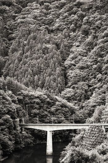 Brıdge Bridge - Man Made Structure Valley Mountain Valley Trees Tunnel Railway From Train Window From My Point Of View Landscape Nature Black And White Monochrome EyeEm Nature Lover EyeEm Best Shots EyeEm Best Shots - Black + White