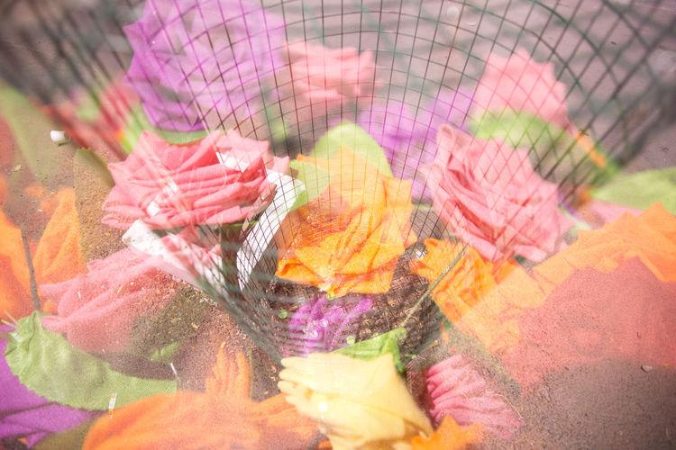 Colours Coloursplash Multiple Exposures Pastel Pastel Colors Pastel Power Roses🌹 Softtones Halvat Ponrajanvikram