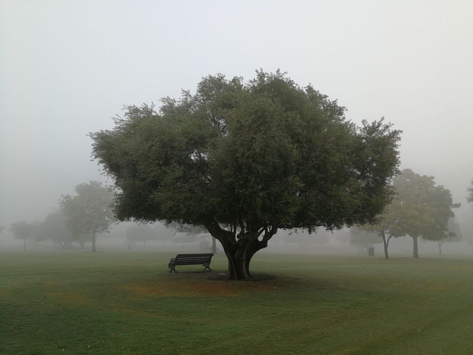 foggy day Tree Fog Grass Nature Landscape Beauty In Nature Field An Eye For Travel