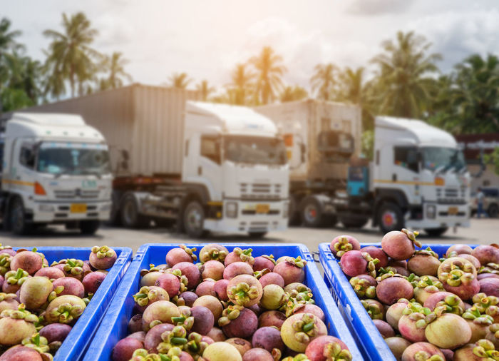 Mangosteen Fruit and food distribution, tropical fruit of Thailand .Truck loaded with containers ready to be shipped to the market. Export Mangosteen Food Truck Transport Market Thailand Background Fruit Healthy Fresh Fruits Ripe Business Organic Agriculture Import Diet Green Natural Health Red Nature Sweet Sale Vitamins Shop Nutrition Product Industry Store Juicy Box Retail  Products Harvest Industrial Delicious Vitamin Buy Produce Group Orange Storage Warehouse Agricultural Food And Drink Healthy Eating Freshness Land Vehicle Mode Of Transportation Wellbeing Transportation Motor Vehicle Large Group Of Objects Day Abundance No People Market Stall Car Apple - Fruit Road Outdoors