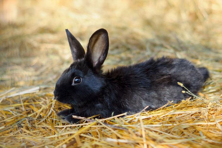 Close-Up Of Rabbit On Grass