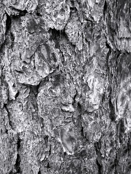 Abstract Backgrounds Close-up Day Full Frame Nature No People Outdoors Pattern Textured  Tree Tree Bark Tree Bark Close Up Tree Bark Colors Tree Bark On Focus Tree Bark Patterns Wood - Material