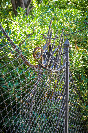 Animal Wildlife Plant Animal Tree Animal Themes Fence Nature Day One Animal Animals In The Wild Boundary No People Barrier Green Color Security Vertebrate Outdoors Safety Protection Metal